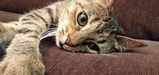 кошки вызывают психические расстройства6